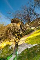 HD-фотопейзаж с растущим на скале кустом в Воронцовском парке в Алупке в Крыму